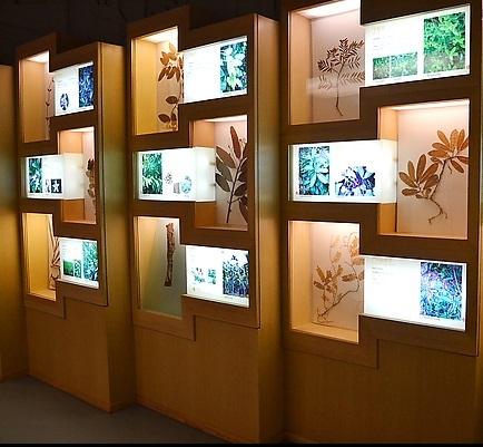 植物竞博app馆1.jpg